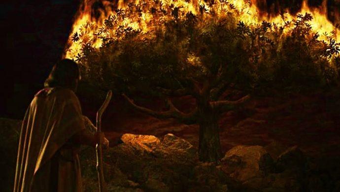 El arbusto que cambió la vida de Moisés
