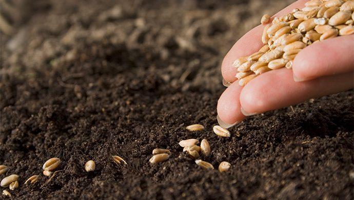 Las semillas que matan