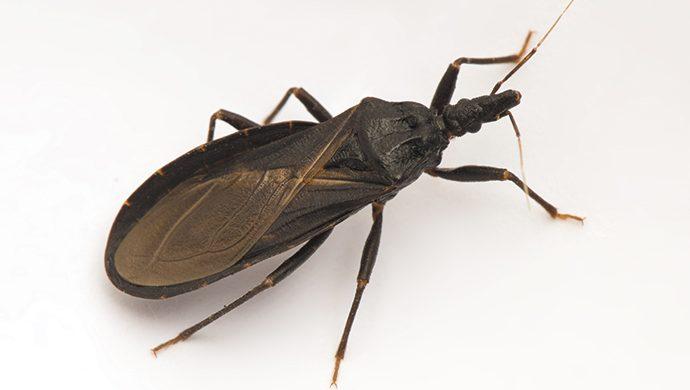 El Mal de Chagas, una  muerte lenta y dolorosa