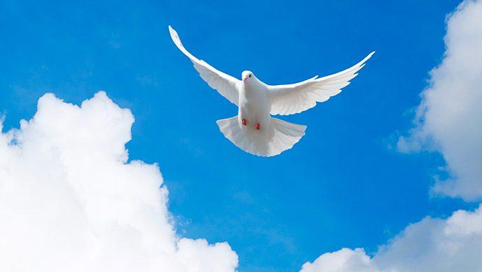 El Espíritu Santo, el sello de la Universal