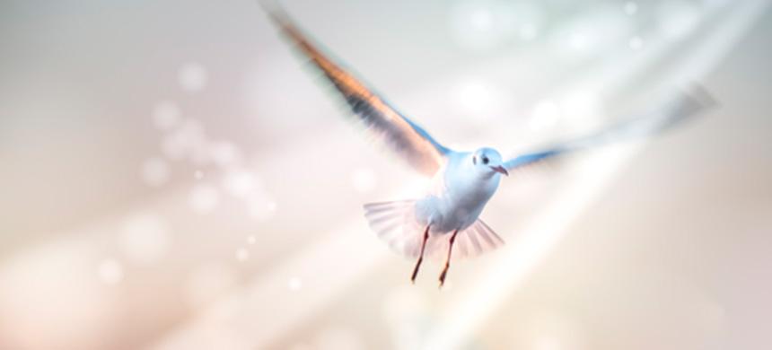 ¿Cómo saber si realmente recibí el espíritu santo?