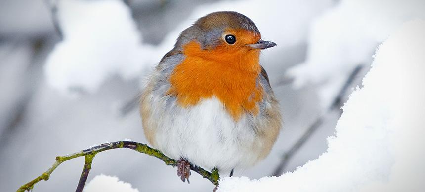 ¿Qué tiene que ver la fábula del pequeño pájaro con usted?