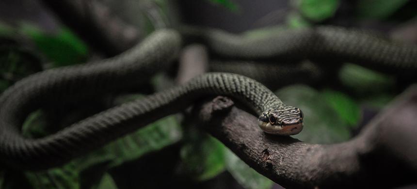 La serpiente y el sabio