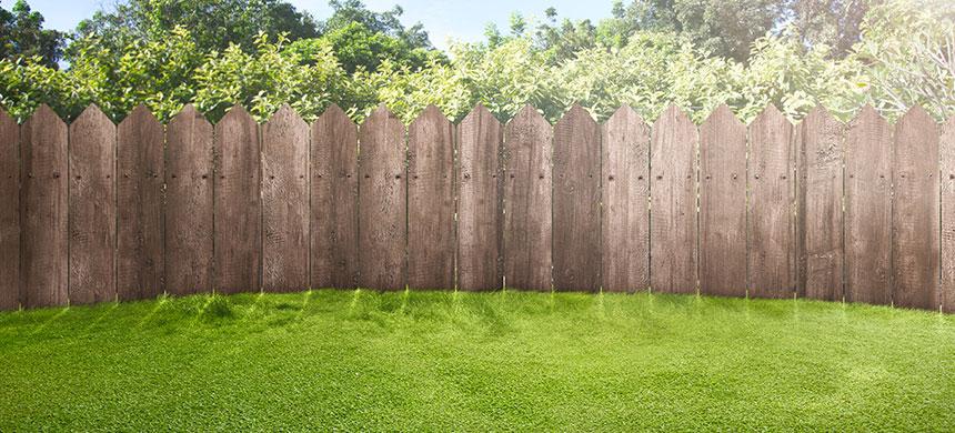 ¿El césped de su vecino es más verde que el suyo?