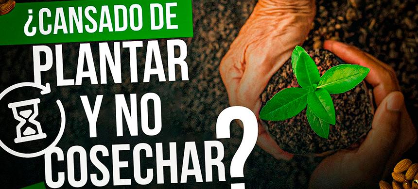 ¿Cansado de plantar y NO COSECHAR?