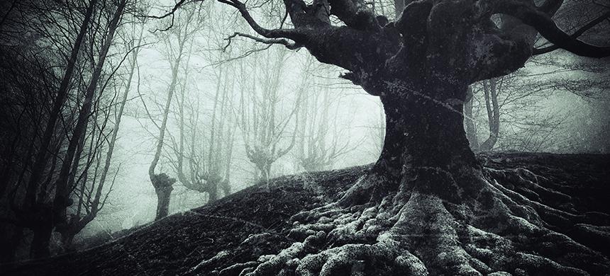 La raíz de tanto miedo