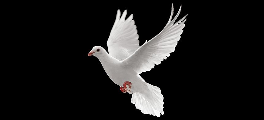 ¿Por qué el Espíritu Santo no desciende sobre todas las personas?
