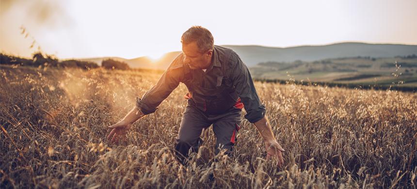 La cizaña y el trigo el tiempo revela quién es quién
